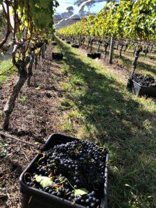 Harvest images 3